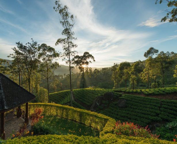 HOT HOTELS: Sri Lanka's luxury hotels with natural surroundings