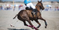 GIDDY UP, AIRNORTH CABLE BEACH POLO IS BACK