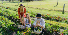 Experience a luxury farm-stay at Jamberoo Valley Farm