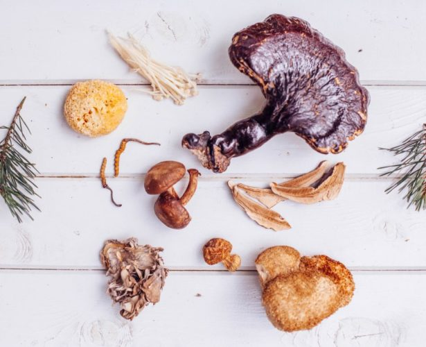 Medicinal mushrooms: what you need to know and how to take them