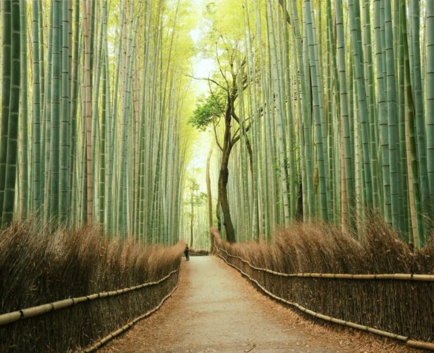 Japan Virtual Tours: Review Japan's 20 most iconic landmarks from your laptop