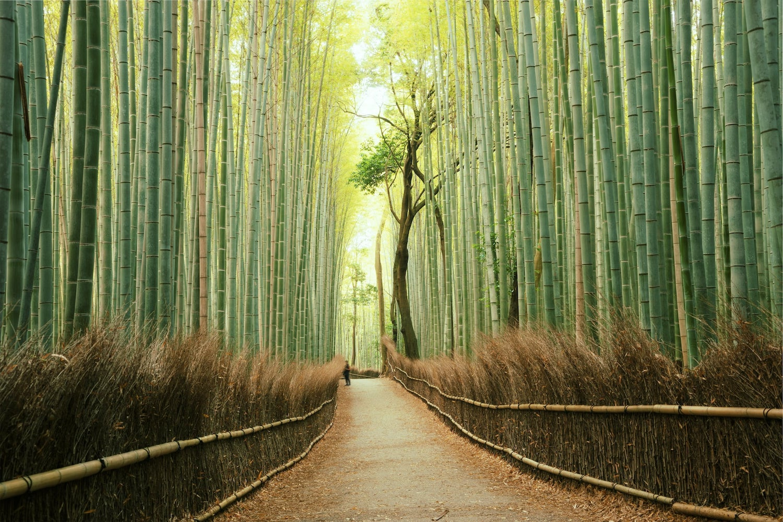 Japan Virtual Tours