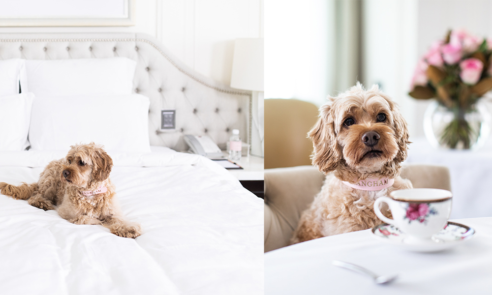 The Langham Sydney Pets Staycation package