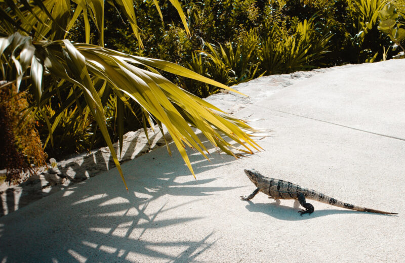 Hiking in the Caribbean for adventure-lovers and wildlife fanatics