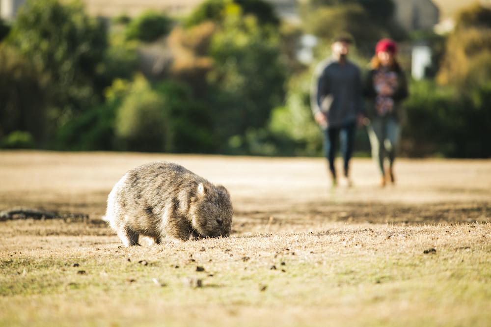 Tasmanian Walks